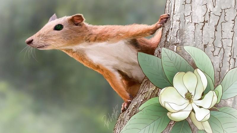 En eski primat ağaçta yaşıyordu   Bilim ve Gelecek